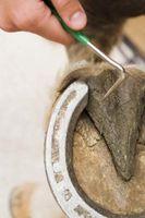 Cómo proteger la suela de un equino