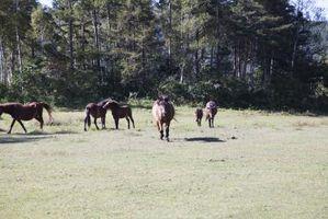 Cómo detener la diarrea en un caballo
