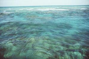 Especies que se encuentran en los arrecifes de coral