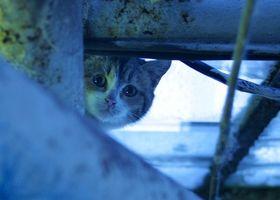 Cómo mantener a un gatito De sube un árbol