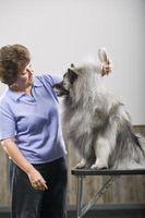 ¿Qué puede hacer que la piel de un perro de la escama En su pelaje?