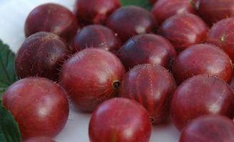 Receta de la grosella espinosa Jam