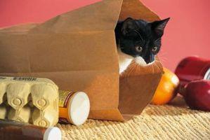 ¿Por qué los gatos golpe en juguetes con sus pies hacia atrás?