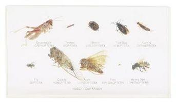 Los tratamientos de pulgas spot