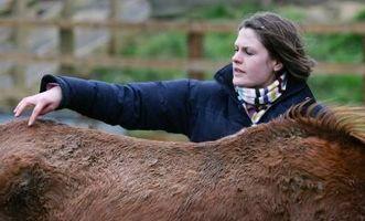 Cómo informar de alguien para no alimentar a los caballos