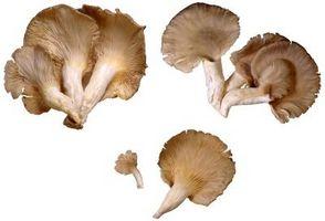 Adaptaciones para las setas de ostra