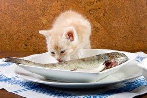 Los alimentos para gatos sanos