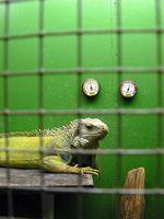 Planes para Construir una jaula de iguana
