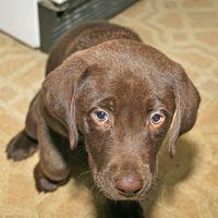 ¿Cuáles son los perros Diseses puede conseguir en los molinos del perrito?