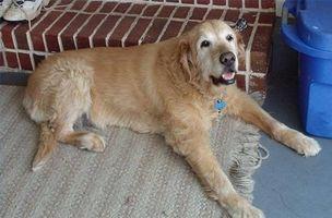 Remedio casero para la artritis en un perro