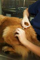 Las vacunas son para un buen perro o malo?