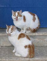 Cómo evitar que los gatos salvajes de entrar en una puerta del gato