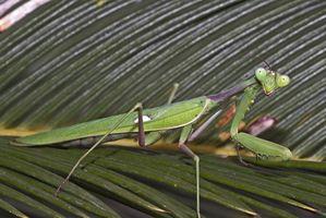 Lista de Insectos en Connecticut