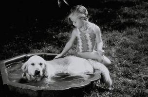 Bañeras para Mascotas