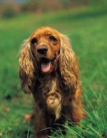 Cómo mantener a los perros entretenido durante el día