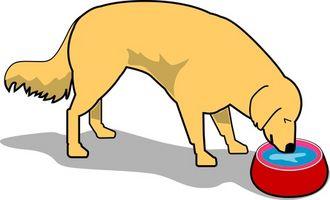 Cómo detener el frenesí de alimentación de un perro