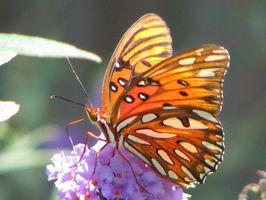 Cómo hacer que las mariposas De Frosting