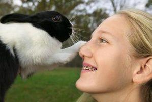 ¿Por qué no los conejos tienen almohadillas en sus patas?