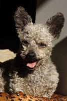 Hoteles que admiten perros en San Francisco