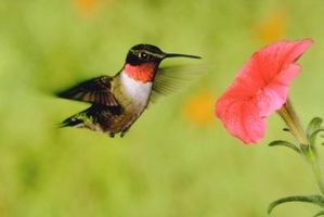 Las instrucciones para Hummingbird Feeders hechas de botellas de vino