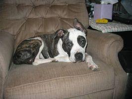 Problemas de estómago canino