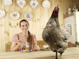 Cómo construir un cobertizo para las gallinas ponedoras