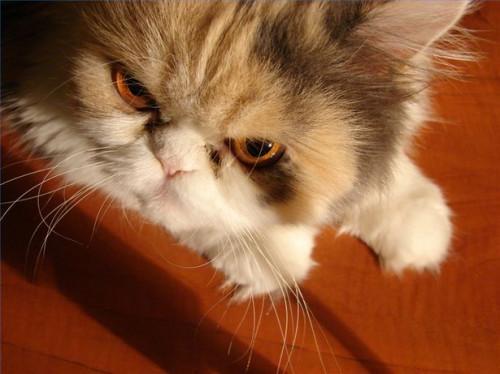Problemas del gato pis