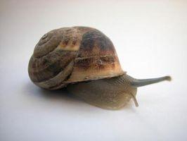 ¿Cuáles son Les escargots?