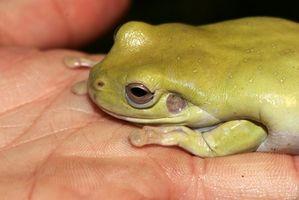 Cómo configurar un sapo y el acuario de la rana