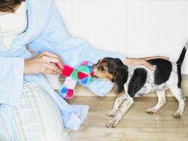 Cómo hacer que las bolas de lana para perros