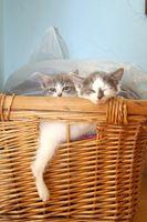 Cómo cuidar a los gatitos del bebé