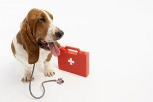 Mi perrito del rocío de la garra está colgando: ¿Qué debo hacer?