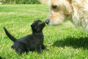Tratamiento integral para canina Pseudociesis