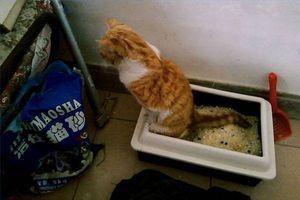 ¿Por qué la orina del gato macho huele tan mal