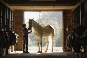 Tipos de mantillo para su uso alrededor de un caballo del granero