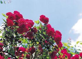 Cómo disfrutar de los mejores jardines de Berkeley