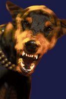 Consejos La agresividad del perro
