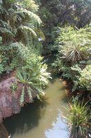 Lista de Insectos de la selva tropical