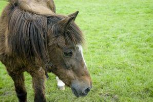 Cómo poner el peso en un caballo viejo
