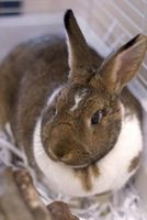 Cómo construir una jaula para conejos Mini