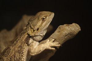 Ejemplos de Nocturnal Reptiles