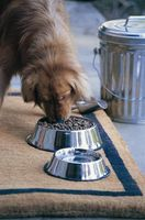 ¿Qué alimentos para perros se llena un perro con menos comida?