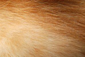 Cómo quitar una racha de naranja en el pelo blanco