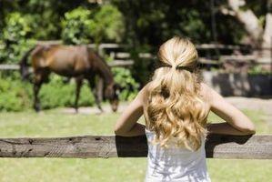 Cómo saber si un caballo es una yegua o un semental
