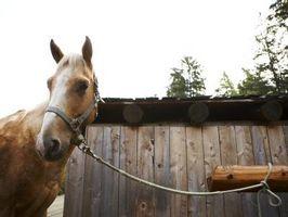 Cómo conectar un caballo a un poste equipo