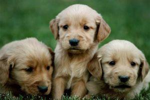 Los signos de un perro provenía de una fábrica de cachorros