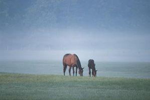 Cómo identificar los parásitos del caballo