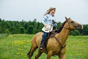 Cómo aplicar el abrigo del cuerpo TTouch para los caballos