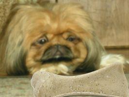 Consejos sobre la captura de un perro muy asustado