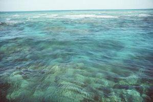 Características del Mar del Coral